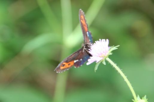 foto vlinder op bloem
